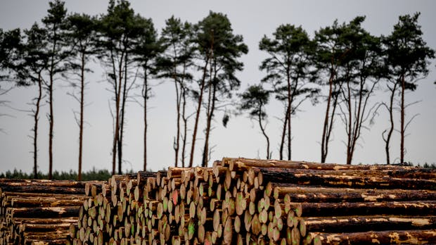 Tesla-Fabrik in Grünheide: Wertvoller Wald oder nutzlose Monokultur?