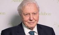 Rekord auf Instagram: David Attenborough knackt die Million Follower in unter 5 Stunden