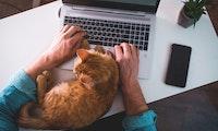Darum liegt deine Katze am liebsten auf der Tastatur – und das kannst du dagegen tun