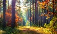 10 Minuten Abschalten: Tree.fm nimmt dich mit in den Wald