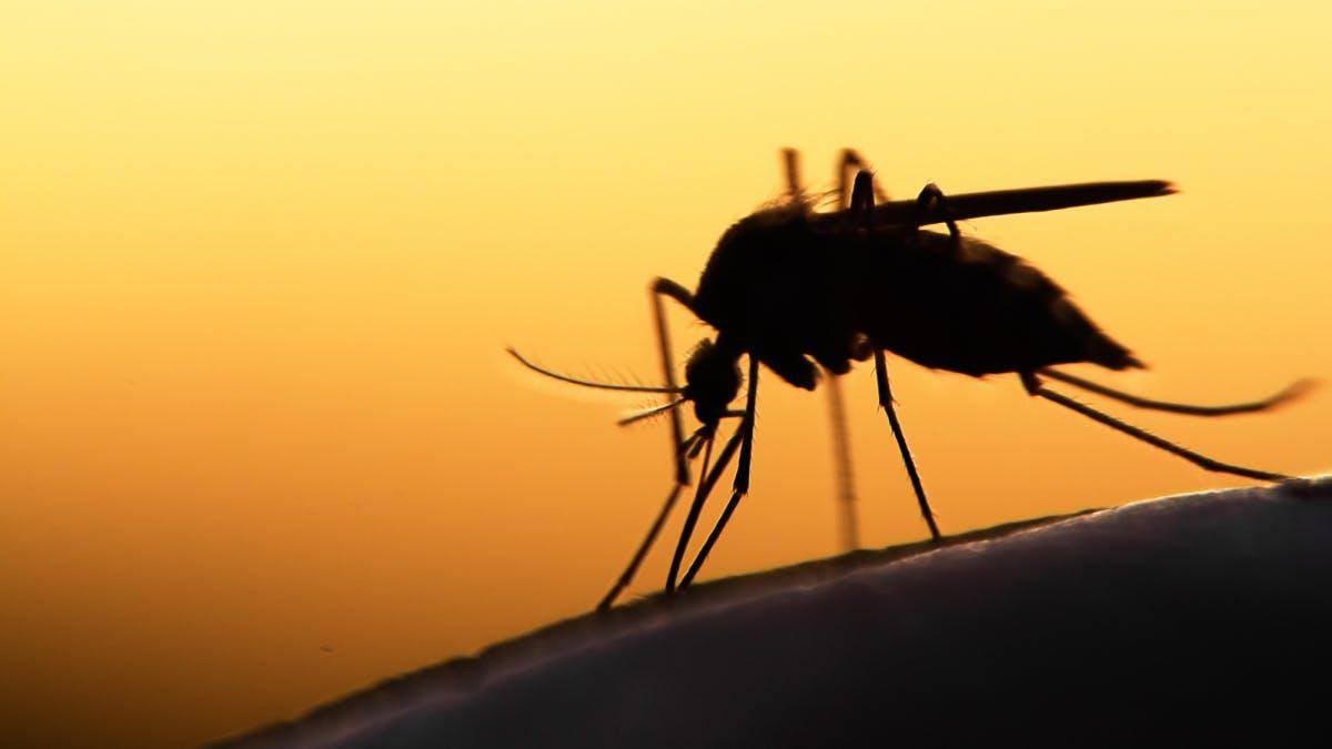 Mit der Laserkanone gegen Stechmücken: Raspberry Pi soll es möglich machen - t3n – digital pioneers