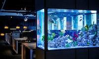 Wie ein Casino durch ein Aquarium gehackt wurde – und was wir daraus lernen können