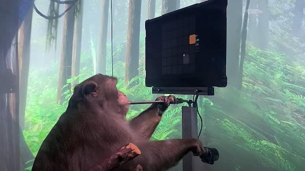 Mit Gedanken: Affe steuert Pong per Elon Musks Neuralink