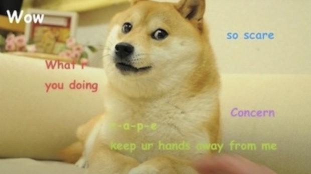 Dogecoin: Woher kommt eigentlich der Hund?