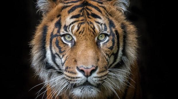 Die Katze im Sack? Tiger-King-Star Carole Baskin launcht Kryptowährung