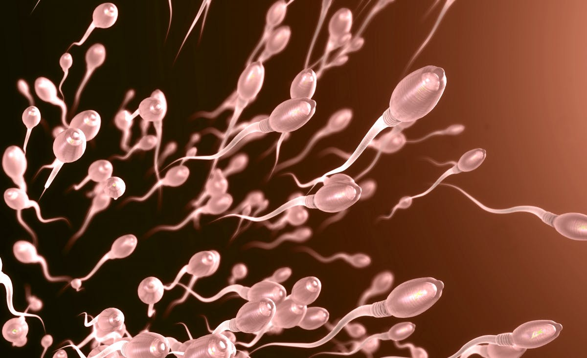 Reproduction in space: sperm resists cosmic rays