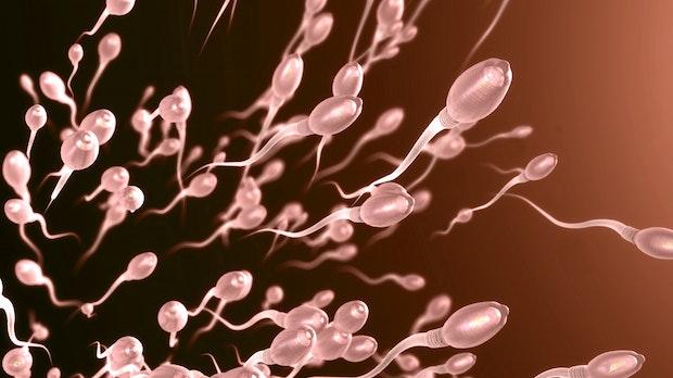 Fortpflanzung im All: Sperma widersteht kosmischer Strahlung